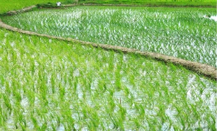 India Registers 23 Percent Increase in Agri Exports in Q1 despite Lockdown