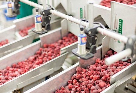 The Food Processing Industry: Ensuring a Perennial Supply of Food