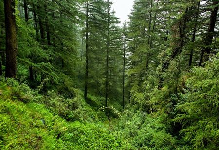 Gujarat averted 187 ha of forest land to industry in 4 years: Government