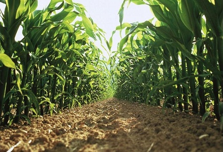 Bayer Crop Science Ropes In BigHaat For Last Mile Delivery