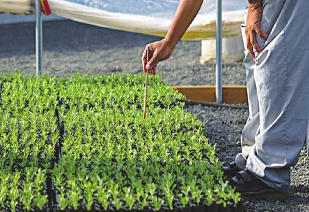 Agrochemical Sector To Register 12-14% Increase In Revenue: Report