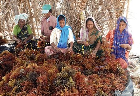 Union Budget: Tamil Nadu to Get a Multi-purpose Seaweed Park